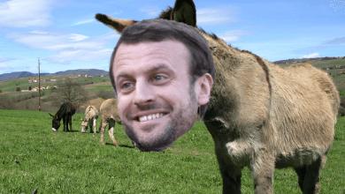 Photo de Les ânes du pragmatisme